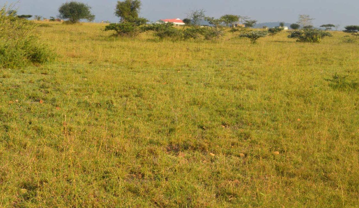 Legal Procedure For Buying Land in Kenya